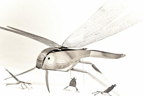XLdragonfly XLbug