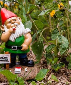 Gnome Smoking Garden Gnome
