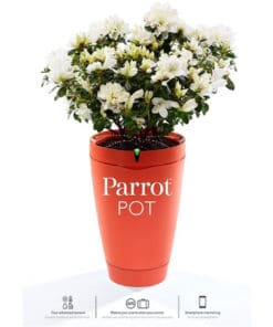 Parrot Pot – Brick Red