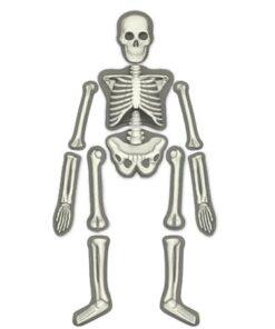 Glow Human Skeleton Science Kit (3375)