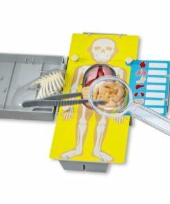 Human Torso Anatomy (3373)