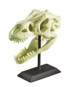 Glow in the Dark Dinosaur Skull (3308M)