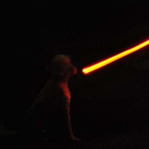 Star Wars Darth Vader Lightsaber Dog Lead