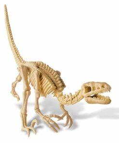Velociraptor Skeleton (13234)