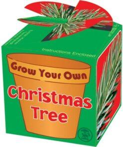 Grow Your Own Christmas Tree kit
